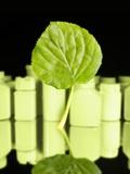 Herbal Medicine  Conceptual Artwork