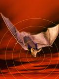 Bat Sonar