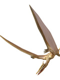 Pterosaur Flying  Computer Artwork