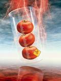 Conceptual Image: Genetically-engineered Tomatoes