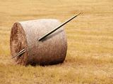Needle In a Haystack  Conceptual Artwork