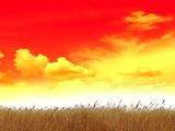 Sunrise At Harvest Time  Artwork