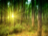 Sunlit Forest artwork