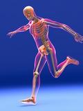 Football Kick  Skeleton Artwork