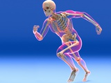 Running Skeleton In Body  Artwork