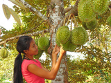 Woman Inspecting Durian Fruit