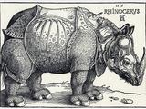 Durer's Rhinoceros  1515