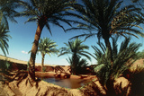Oasis on the Road South of Adrar  Algeria