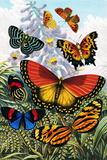 Butterflies  Artwork