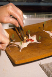Biology Lesson: Gloved Hands Dissecting a Mouse