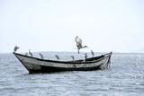 Birds Sitting on a Boat