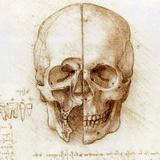Skull Anatomy by Leonardo Da Vinci