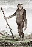 1770 Buffon's Jocko a Chimpanzee