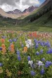 Alpine Flowers In Rustler's Gulch  USA