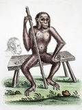 1757 Edwards' British Orangutan
