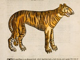 1607 Tiger by Topsell