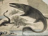 1862 Hawkin's Icthyosaur & Plesiosaur