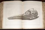 1814 Mary Anning First Ichthyosaur Skull