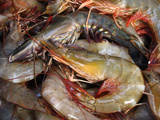 Shrimps At a Market