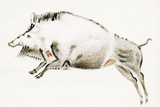 Cave Painting of a Boar  Artwork