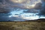 Grasslands Near Portal