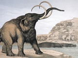 1862 British Mammoth with Carnivores