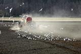 Sowing Crops  Sweden