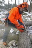 Forest Worker Sawing Timber