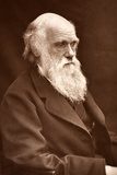 1874 Charles Darwin Picture by Leonard