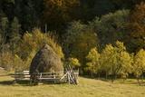 Hay Stooks In the Zsil Valley  Romania