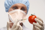 Genetically Engineered Tomato