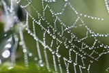 Dew Drops on a Spider's Web