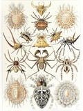 Arachnid Organisms  Artwork