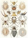 Arachnid Organisms  Artwork