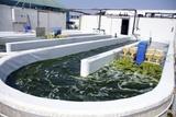 Growing Algae for Fish Food