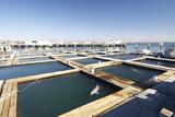 US Navy Marine Mammal Program  San Diego
