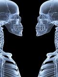Skeletons  X-ray Artwork