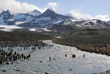King Penguin Breeding Colony