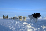 Dogsledge  Northern Greenland