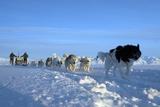 Dogsledge  Northern Greenland