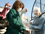 Bird Flu Vaccination