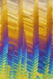 Caffeine Crystals  Light Micrograph