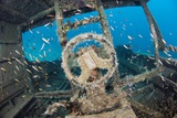 Shipwreck And Fish