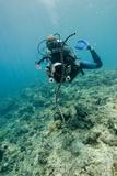 Diver Filming a Sea Krait