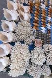 Seashell Trade