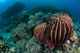 Sponges on Coral Reef
