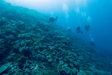 Divers Exploring a Coral Reef