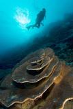 Diver Exploring a Coral Reef