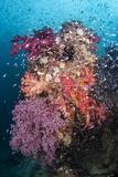 Coral Reef Community