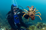 Diver Holding a Crayfish